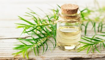 Tea tree oil: usi e prezzo